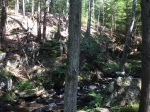 Kettletown hemlock ravine