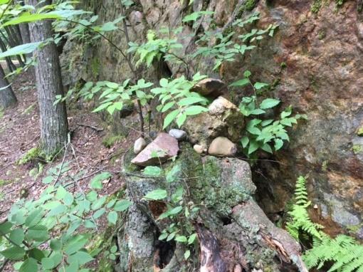 Vernon rocks and plants