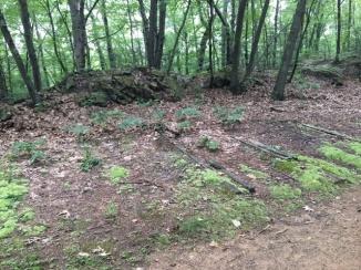 Vernon Trail remnants