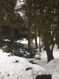 Elizabeth Park creek