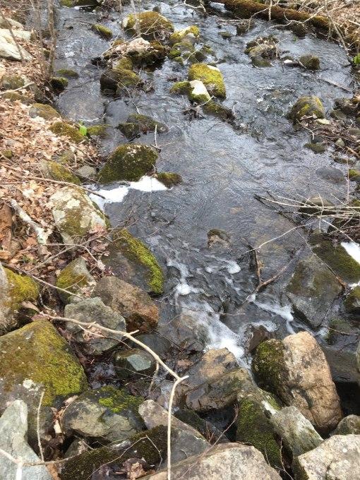 Hopeville Pond 4